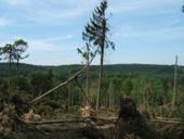 Waldbilder nach Kyrill 007